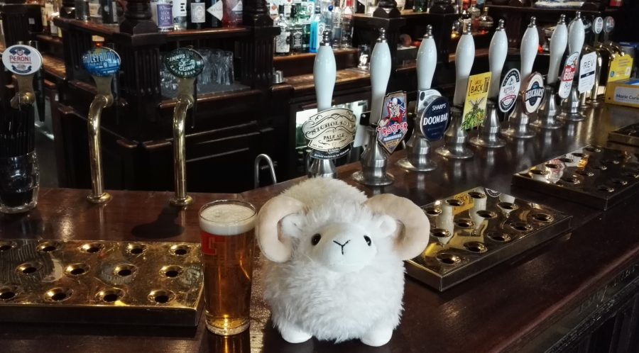 Highland-Schaaf im Pub