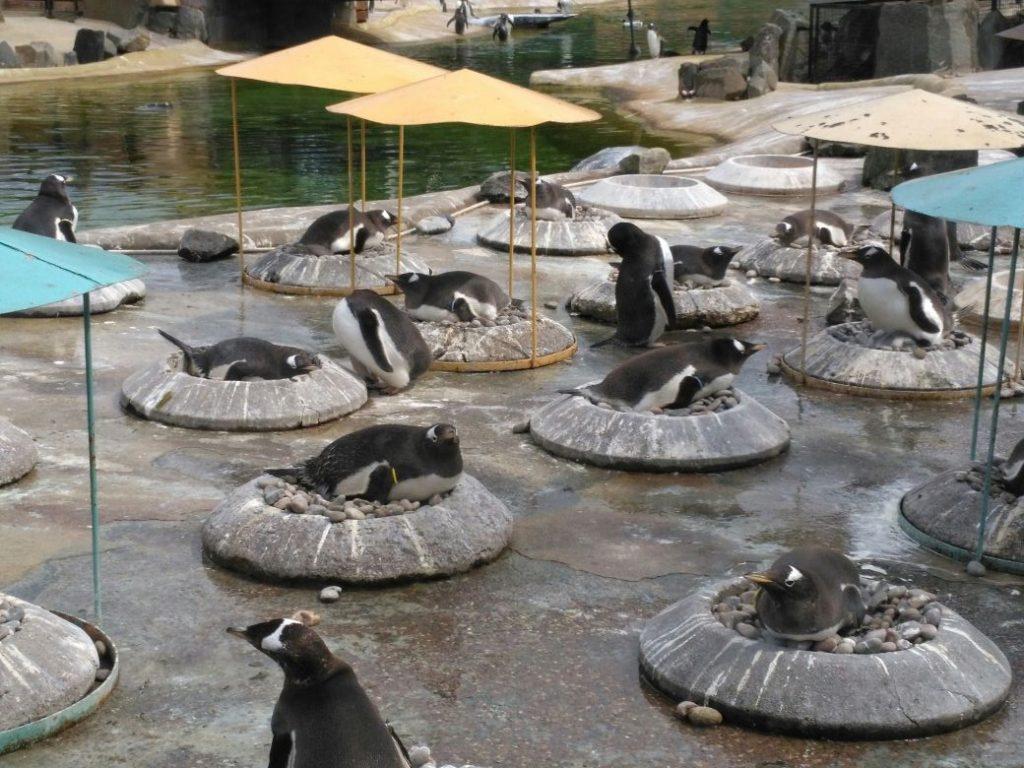 Pinguin Wanderung Edinburgh